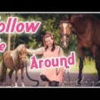 Follow me around – Pferde Shooting – Hinter die Kulissen