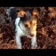 Hund springt wie Gummiball